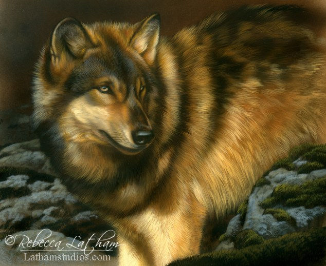Looking Back - Wolf,  Opaque & transparent watercolor with sterling silver on board, 9in x 11in, ©Rebecca Latham