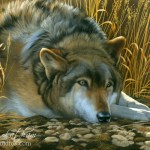 Resting - Wolf, Watercolor & Sterling Silver, 12in x 18in, ©Rebecca Latham