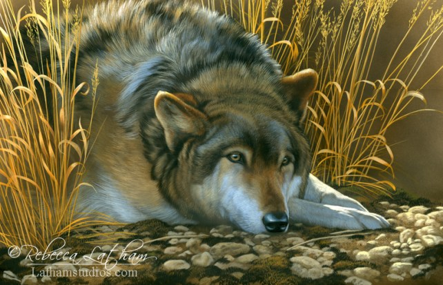 Resting - Wolf,  Opaque & transparent watercolor with sterling silver on board, 12in x 18in, ©Rebecca Latham