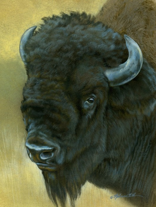 """Old Soul - Bison, watercolor on board with sterling silver, 6"""" x 8"""""""
