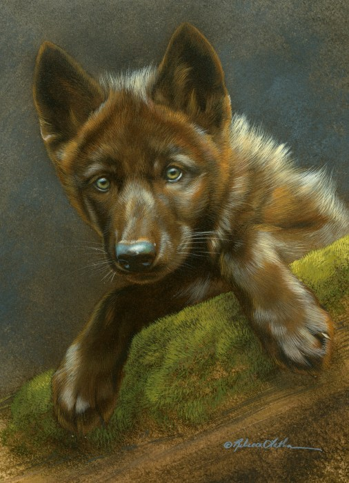 "Curious Pause - Wolf Pup, watercolor on board with sterling silver, 6"" x 8"""