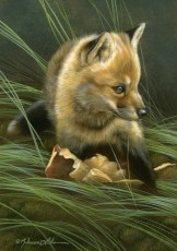 "Unsure - Red Fox Kit, 5"" x 7"", watercolor on board, ©Rebecca Latham - The Snowgoose Gallery The Art of the Miniature XXIII"