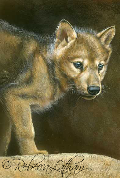 Momentary Pause - Wolf Puppy,  Opaque & transparent watercolor with sterling silver and 24kt gold on board, 6in x 8in, ©Rebecca Latham