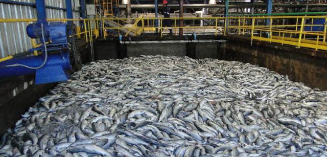 Bisher gingen 124 Tonnen verloren, weniger als die geschätzten 650.000 Tonnen im vergangenen Jahr