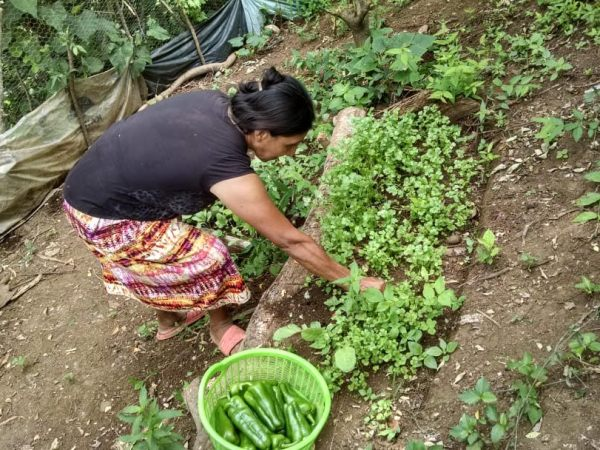 Community Development Organization in El Salvador Empowers Rural Communities through Food Security and Gender Equity Projects
