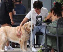 Shawn Mendes está de visita en Toronto junto a Camila Cabello