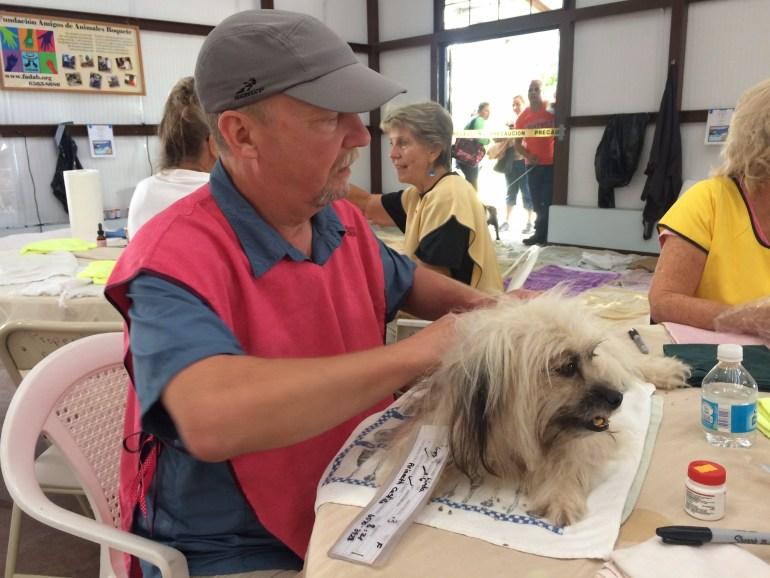 01733a2787bd727fe8b55bf61d22e19d3ab6663f60 Dogs and cats, cats and dogs! Pets The Expat Life