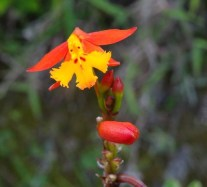 orchid Journey to the Clouds Hiking in Panama The Expat Life The Great Outdoors