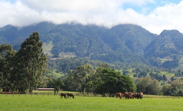 img_6782 Day Trippin' - Cerro Punta Panama The Expat Life