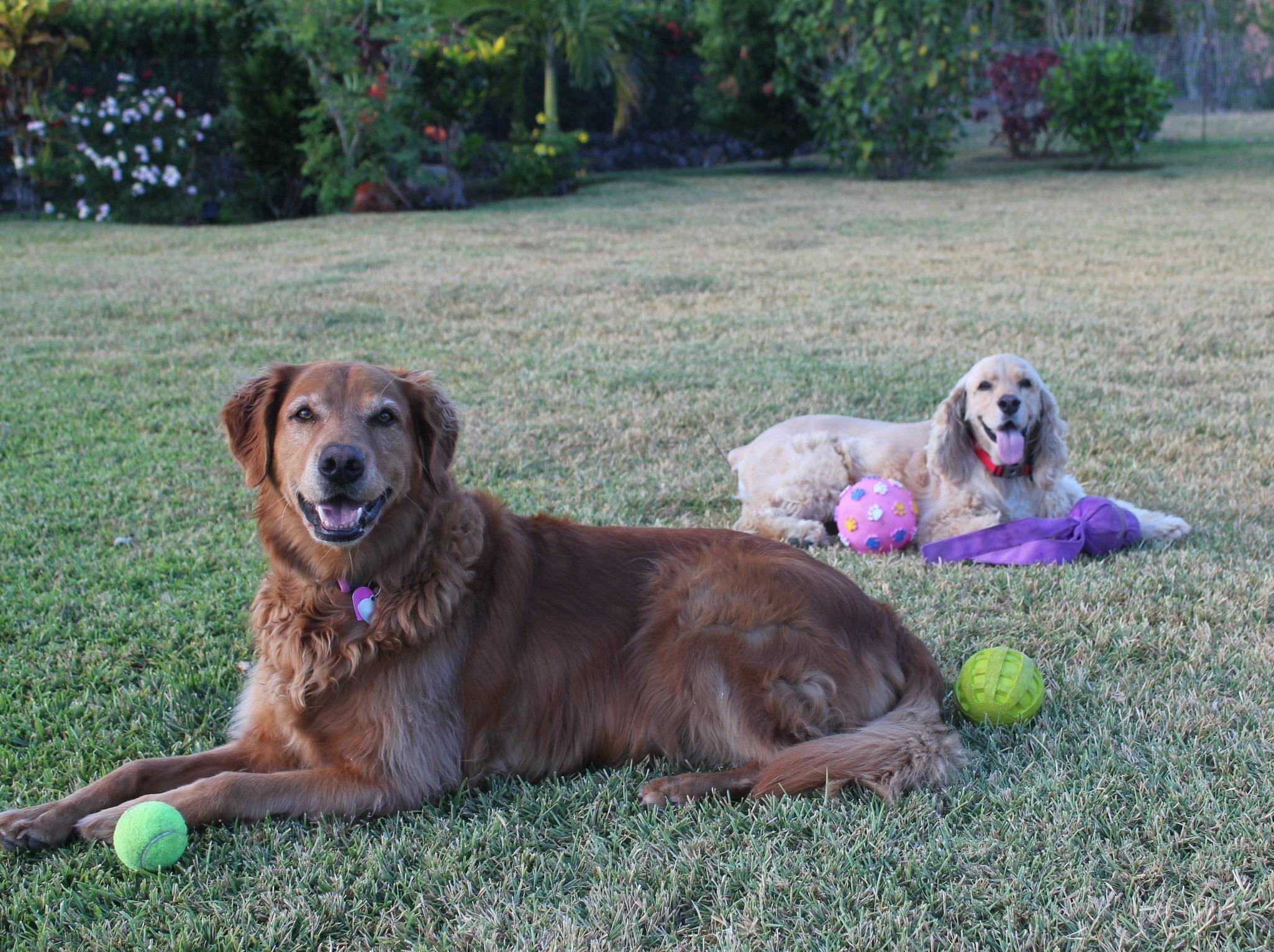 img_6844 Four to Tango Pets The Expat Life