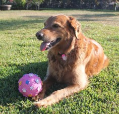 img_6865 Four to Tango Pets The Expat Life