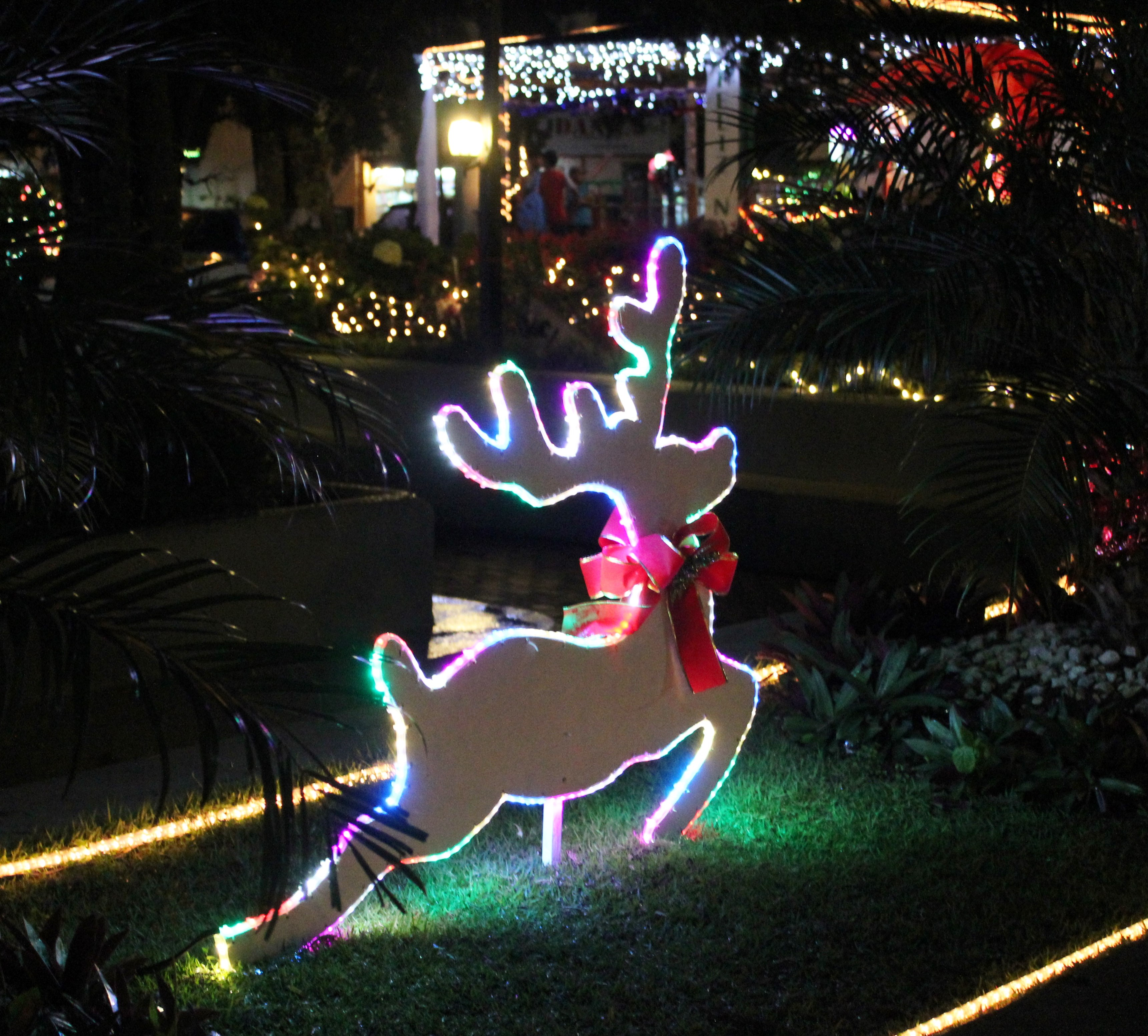 img_7920 A Very Boquete Christmas Panama The Expat Life