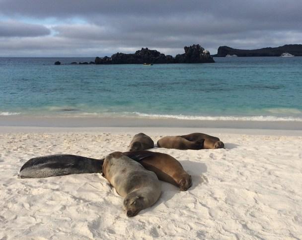 Sea-Lions-Chilling-on-the-Beach The Galapagos Islands - Pinniped Paradise! Ecuador Galapagos Islands Panama