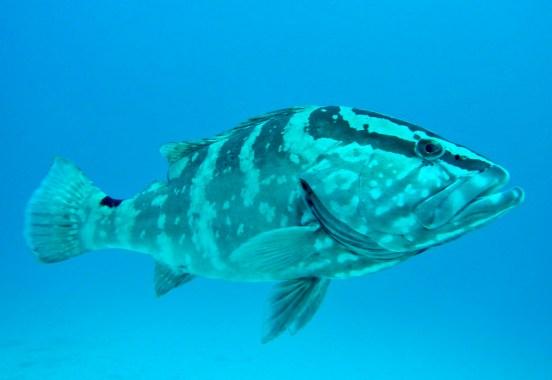 fullsizeoutput_6de A Fishy Tale: Diving in the Bahamas Bahamas Diving