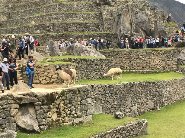 k6Byt9PASFiOyhbeihiA-1024x768 The Machu Picchu Experience Machu PIcchu Peru
