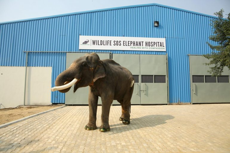 Elephant-Hospital-1024x682 Guest Post: The Elephants of India's Wildlife SOS India
