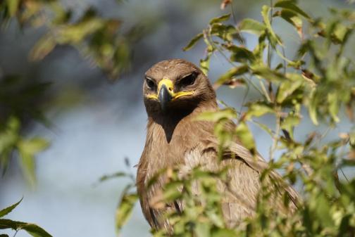 8C611D24-ACF4-4570-BB50-025BC8C36214-1024x684 Guest Post: Tiger Safari in Ranthambore National Park India