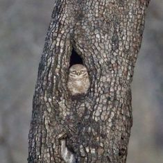 Wes-owl-in-tree Guest Post: Tiger Safari in Ranthambore National Park India