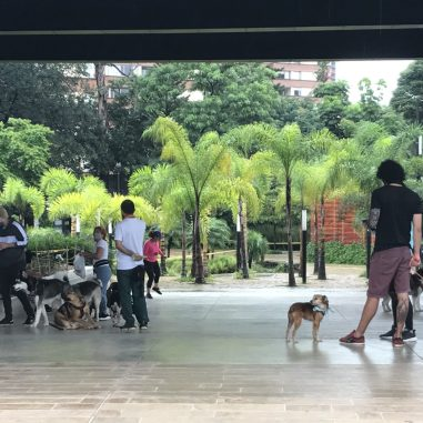 IMG_3879-1-scaled Walking in Medellín: Our Salvation in a Quarantine Colombia