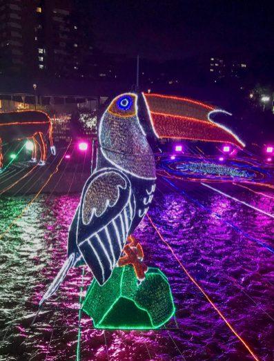 fullsizeoutput_5409-scaled ¡Feliz Navidad! Medellín Lights Up for Christmas Colombia Medellin