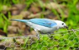 DSCN2430 Backyard Birds! Colombia The Great Outdoors