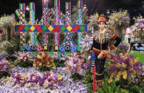 orchid show-10