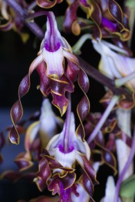 orchid show-3