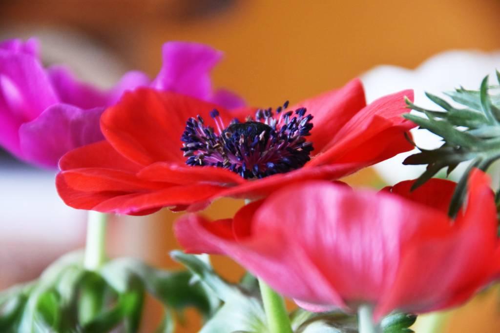 fleurs galerie