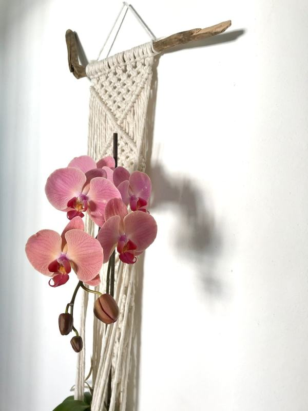 suspension pour plante en macramé Mydas La Tortue Fait Maison