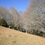 Tot Caminant: Castell del Milany