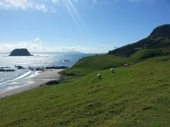 Bahía de Fletcher. Paseando en soledad por la zona