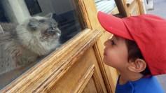asier-y-el-gato