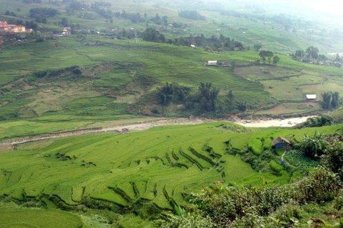 Terrazas cultivadas
