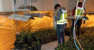 incautación de alijo de marihuana en San Sebastián de los Reyes