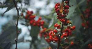 beneficios y propiedades de los frutos rojos