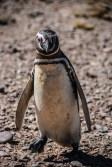 pinguinera-camarones-7213