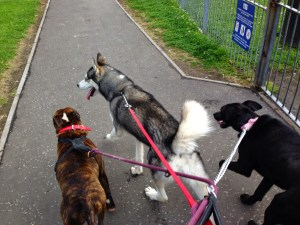 rescue dogs 2 dog