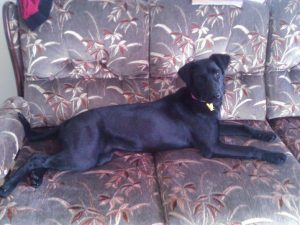 protect your sofa from dogs