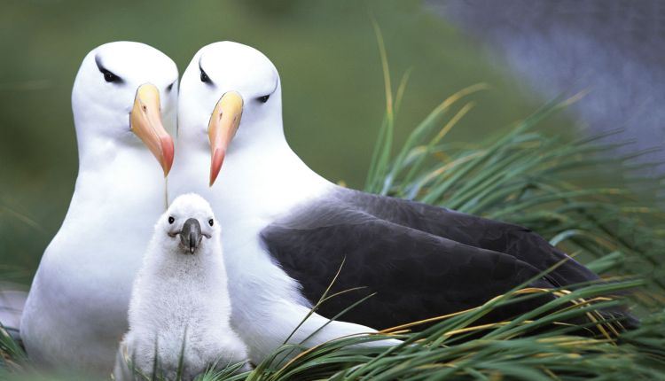 An expedition to the remote Subantarctic Islands of New Zealand and Australia