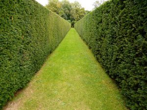 hedge-row