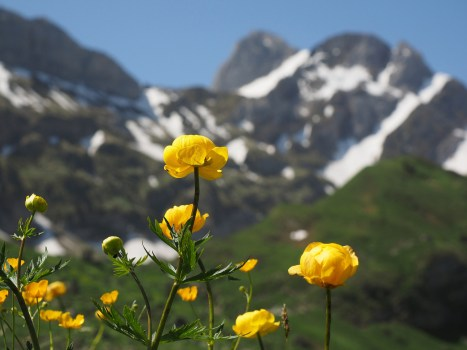 yellow flowers in a valley