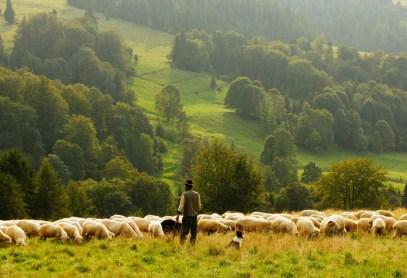 Любовь: ключ к оказанию помощи потерянной овце