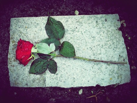 Rose sitting on a headstone