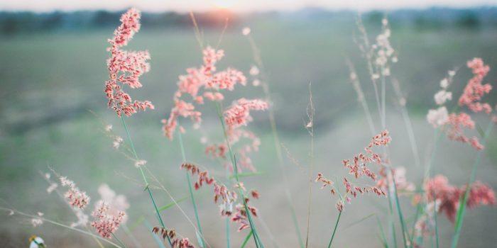 Pink flowers & grass