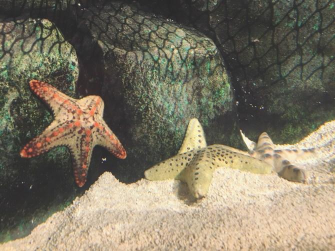 Sea Life Aquarium