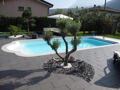 Une piscine avec un olivier dans un massif
