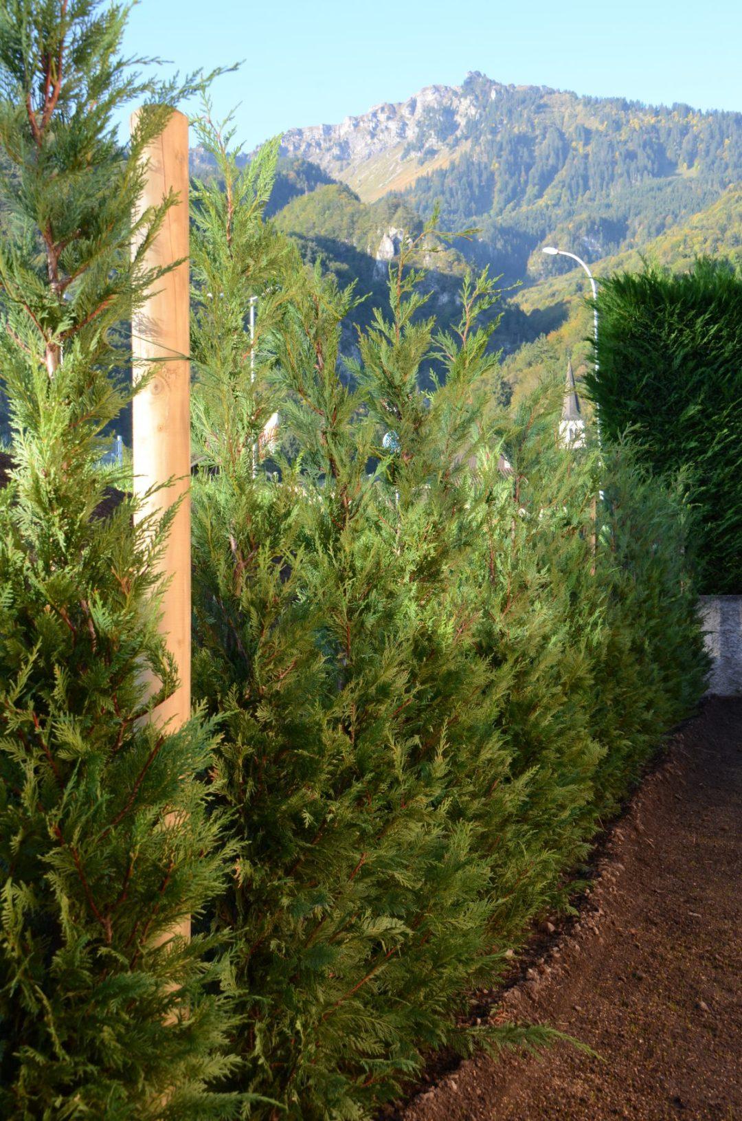 Lattion&Veillard_Paysagiste_Piscine_Spa_Valais_Vaud_Plantations de haies