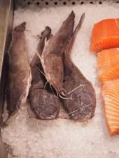 Catfish (sams)
