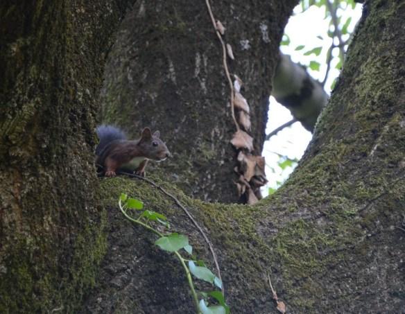 écureuil parc grenoble