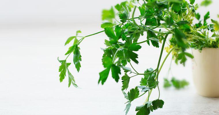 5 étapes pour mieux conserver ses herbes fraîches